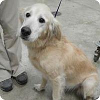 Adopt A Pet :: Ivory - Denver, CO