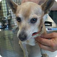 Adopt A Pet :: Dino - Chico, CA