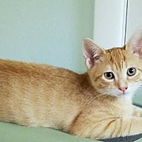 Adopt A Pet :: Ron and Hermoine - Westwood, NJ