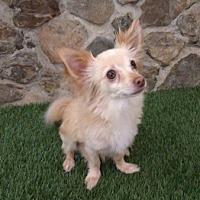 Adopt A Pet :: Chuck - Temecula, CA