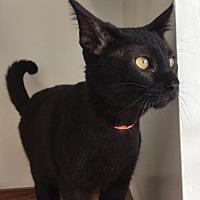 Adopt A Pet :: Ronnie - Columbus, OH