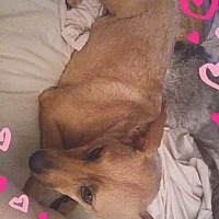 Adopt A Pet :: Mrytle - Ogden, UT