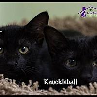 Adopt A Pet :: Knuckleball - Richardson, TX