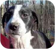 Border Collie/Hound (Unknown Type) Mix Puppy for adoption in Foster, Rhode Island - Gabby