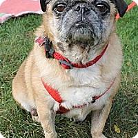 Adopt A Pet :: Tasha - Walled Lake, MI