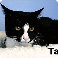 Adopt A Pet :: Taz - Medway, MA