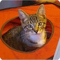 Adopt A Pet :: Marty - Colmar, PA