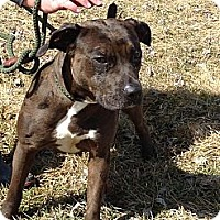 Adopt A Pet :: # 076-14  @ Animal Shelter - Zanesville, OH