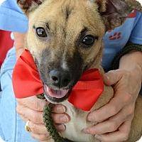 Adopt A Pet :: Bing - Rockaway, NJ
