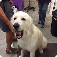 Adopt A Pet :: Spud - Minneapolis, MN