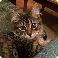 Adopt A Pet :: Lil Miss - Brooklyn, NY