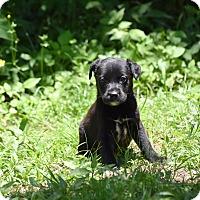 Adopt A Pet :: giana - South Dennis, MA
