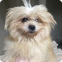 Adopt A Pet :: Watson - Oak Ridge, NJ