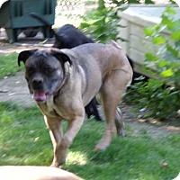Adopt A Pet :: Marley - Yakima, WA