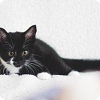 Adopt A Pet :: Bagheera - Vancouver, BC