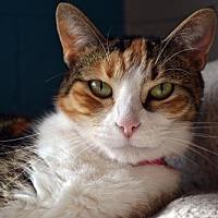 Adopt A Pet :: Precious - Akron, OH