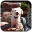 Photo 1 - Bichon Frise Dog for adoption in Oak Ridge, New Jersey - Noodles