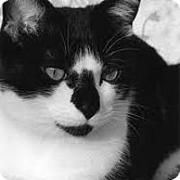 Adopt A Pet :: Taylor - Lancaster, MA