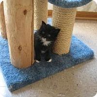 Adopt A Pet :: Cylde - Omaha, NE