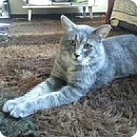 Adopt A Pet :: Christopher - Vancouver, BC