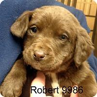 Adopt A Pet :: Robert - Greencastle, NC
