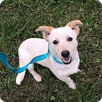 Adopt A Pet :: Raj - Russellville, KY