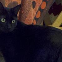 Adopt A Pet :: Hubble - Santa Rosa, CA