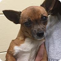 Adopt A Pet :: Gina - Orlando, FL