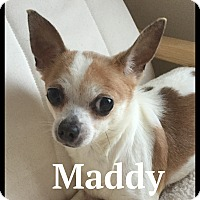 Adopt A Pet :: Maddy - Indian Trail, NC