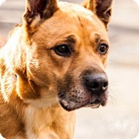 Adopt A Pet :: Brock - Port Washington, NY