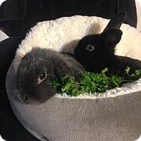 Adopt A Pet :: Breta and Lilac - Conshohocken, PA