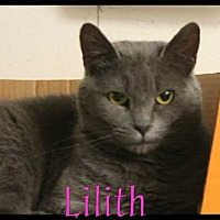 Domestic Shorthair Cat for adoption in Crandall, Georgia - Lilith