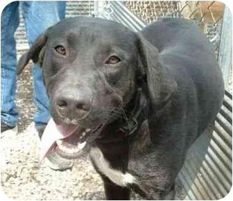 Labrador Retriever Mix Dog for adoption in Makinen, Minnesota - Moose