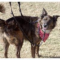 Adopt A Pet :: Cheyanne - Tempe, AZ