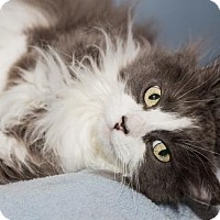 Adopt A Pet :: JJ - Lowell, MA