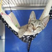 Adopt A Pet :: Ebony - Pequot Lakes, MN