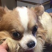 Adopt A Pet :: Giztoy - DeSoto, IA