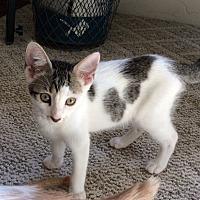 Adopt A Pet :: Tex - Prescott, AZ