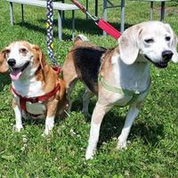 Adopt A Pet :: Riley - Twinsburg, OH