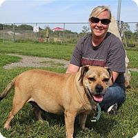 Adopt A Pet :: Oprah - Elyria, OH