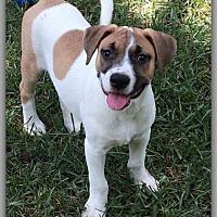 Adopt A Pet :: Cayden - DeForest, WI