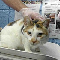 Adopt A Pet :: SIERRA - Albuquerque, NM