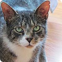 Adopt A Pet :: Simon - Douglas, ON
