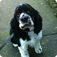 Adopt A Pet :: FRIEND - Tacoma, WA