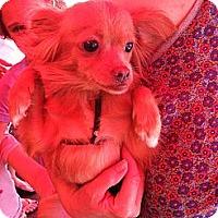Adopt A Pet :: Emma - North Hollywood, CA