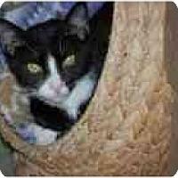 Adopt A Pet :: Mr. Hyde - Marietta, GA