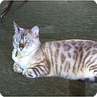Adopt A Pet :: Moxie - Lantana, FL