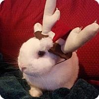 Adopt A Pet :: Oscar - Williston, FL