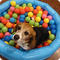 Adopt A Pet :: Timmone - Yardley, PA