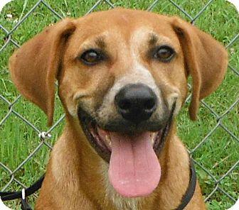 Retriever (Unknown Type)/Boxer Mix Puppy for adoption in Cedartown, Georgia - 28289052
